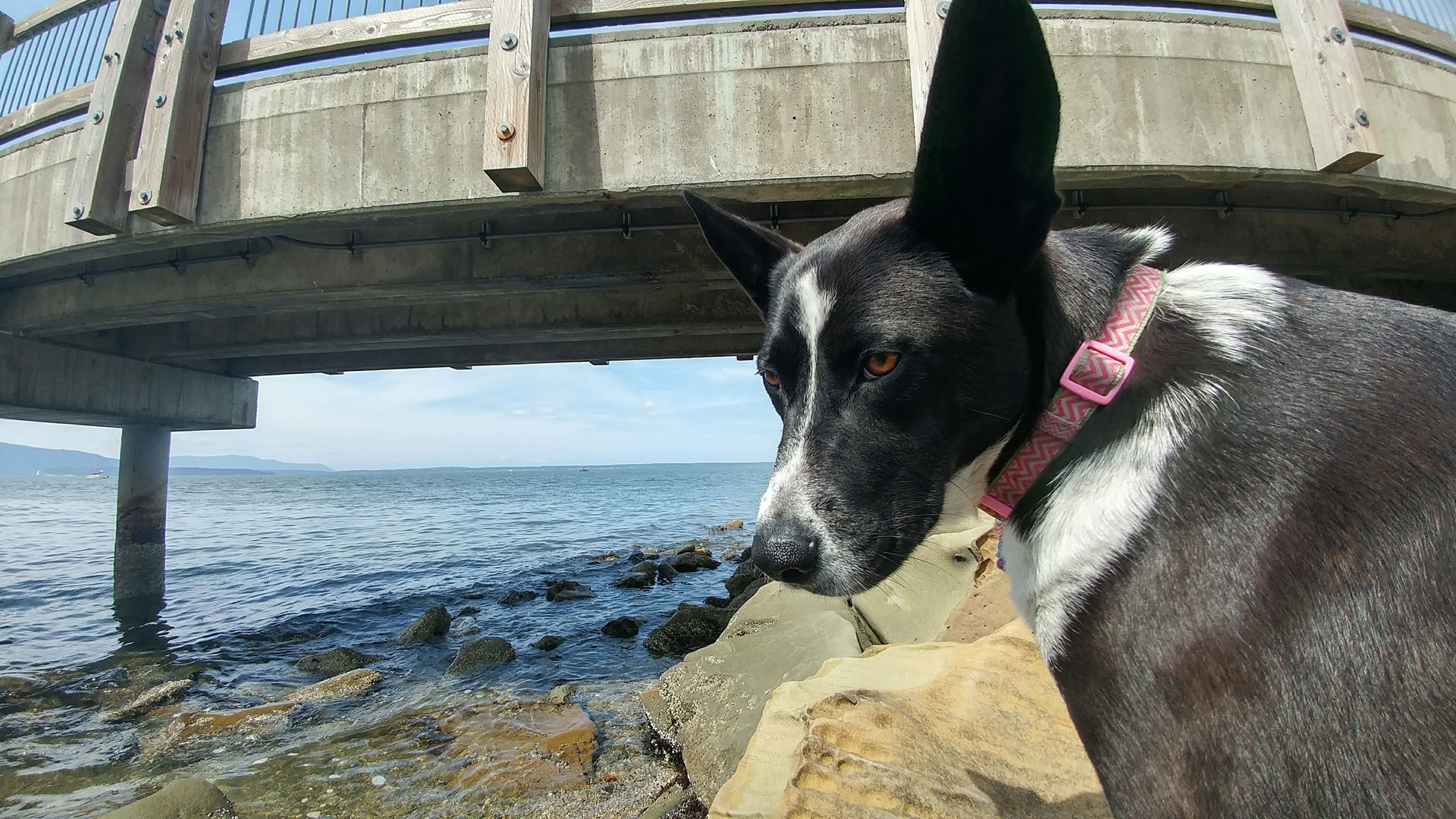 Dog-Cleo-bellingham-beach-trail