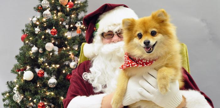 Santa Paws Photos