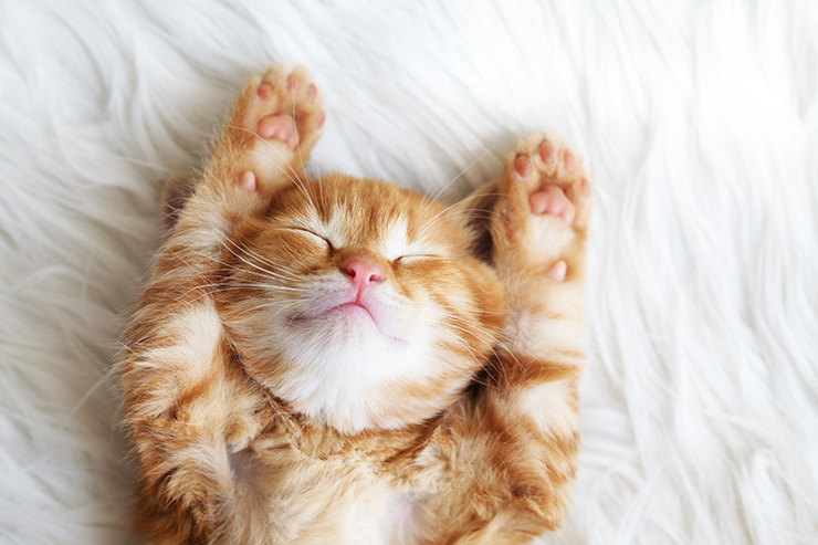 """Meowga"" ~ Yoga with Kittens!"