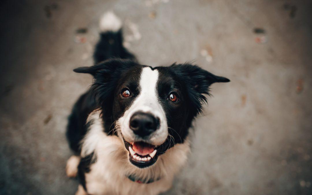 How to Speak Dog – Virtual Class