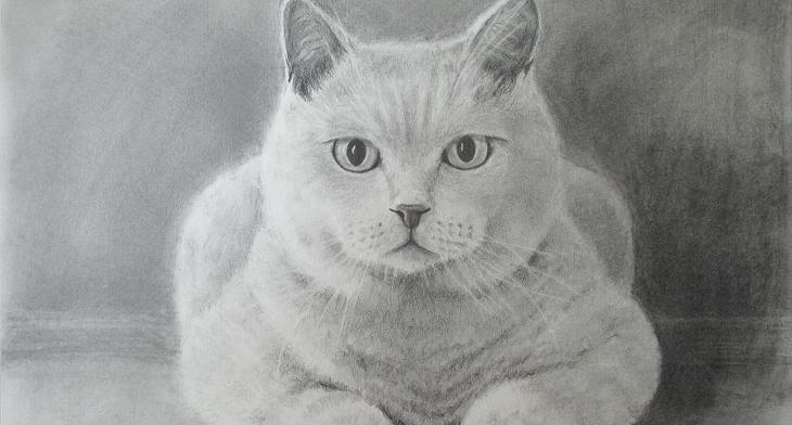 Paw-Casso Pet Portraits
