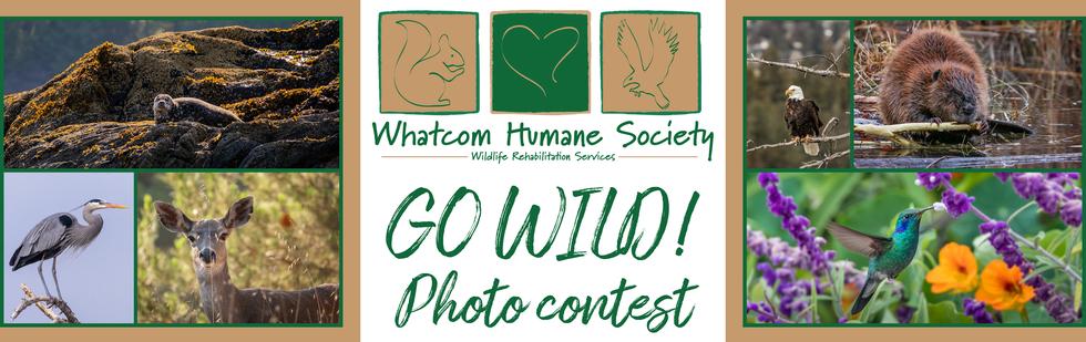 Go Wild! Photo Contest